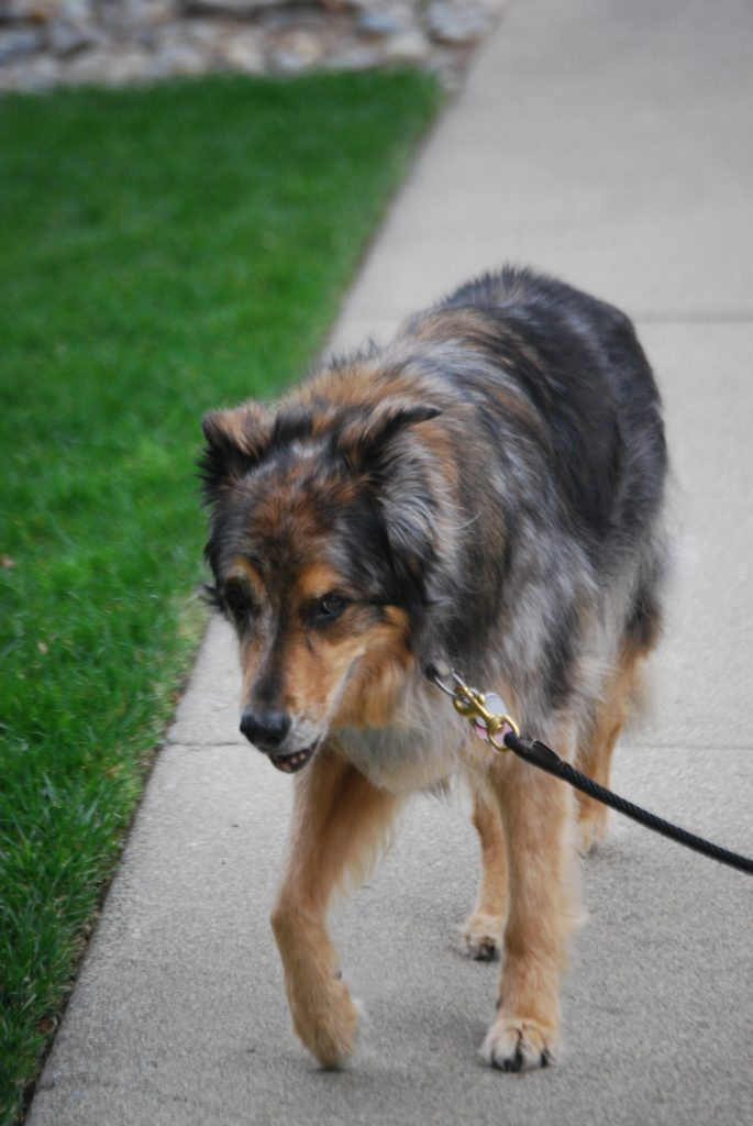 My Pet Is Limping - Evaluate Treatments