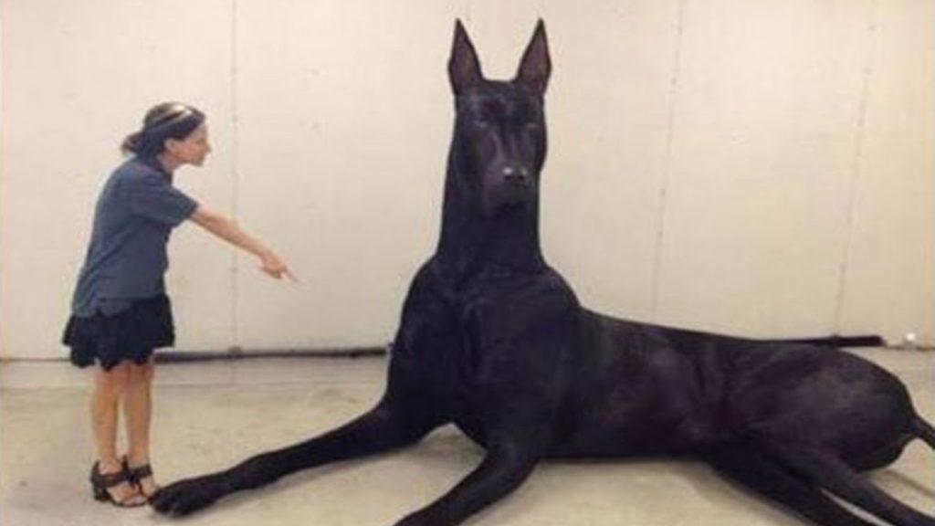 biggest dog – Buy Your Pet Supplies Online