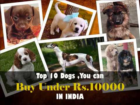 Dog Breeds Under 10000 Rupees In India L Cheap Dogs Breeds Price In India 2018 L Dogs In Hindi Buy Your Pet Supplies Online